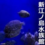 初めての新江ノ島水族館(えのすい)で写真を撮ってきた【EOS6D撮影】